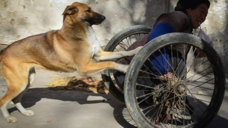 every-morning-dog-pushes-wheelchair-disabled-owner-market-story-canine-devotion-3