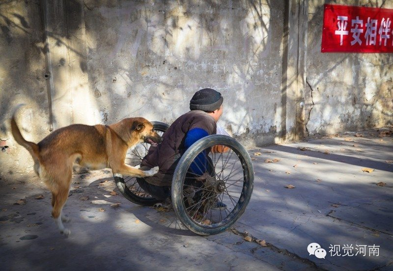 every-morning-dog-pushes-wheelchair-disabled-owner-market-story-canine-devotion-7