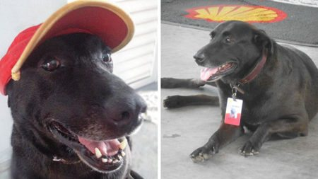 dog-abandoned-gas-station-found-new-home-loving-owners-even-job-1