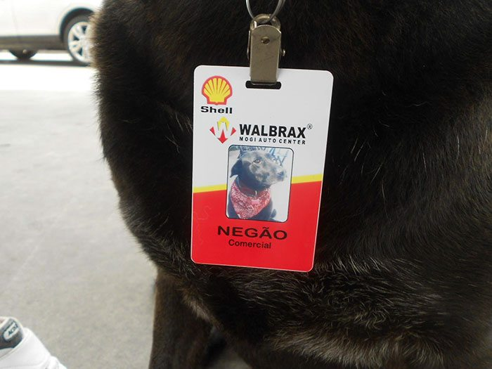 dog-abandoned-gas-station-found-new-home-loving-owners-even-job-4