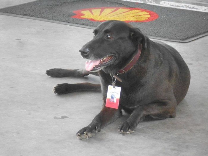 dog-abandoned-gas-station-found-new-home-loving-owners-even-job-5