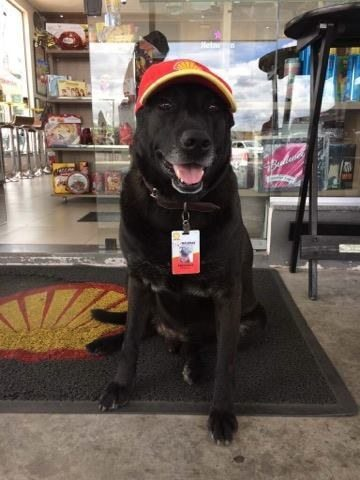 dog-abandoned-gas-station-found-new-home-loving-owners-even-job-7
