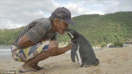 year-penguin-swims-8000-kilometers-meet-best-friend-4