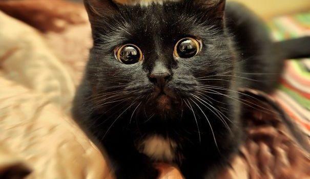 20-artistic-cats-need-nominated-oscar-19